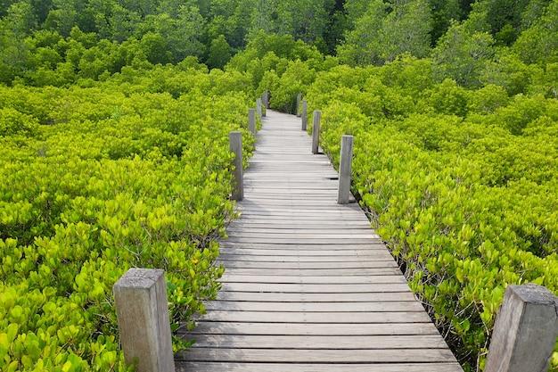 森林の木製の歩道