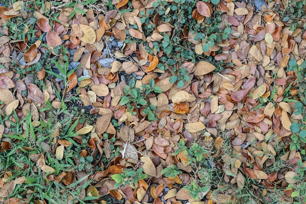 地面に乾燥した葉