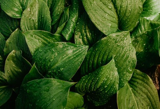 緑の葉に大きな水滴