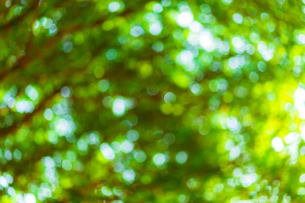 サークルと緑のボケの背景。夏の抽象的なテーマ。
