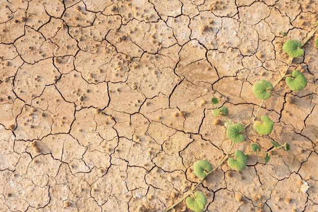 茶色の乾いた土壌やひびの入った地面のテクスチャ背景。