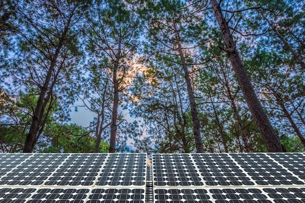 Солнечные панели на лиственничном лесу летом с разными деревьями