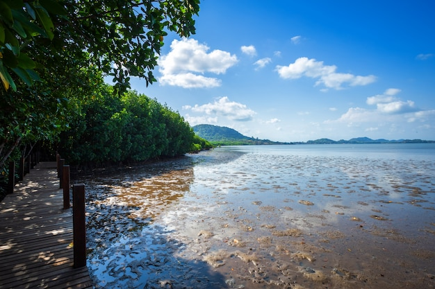 チャンタブリータイの森林マングローブと海の地平線の木製の歩道を橋します。