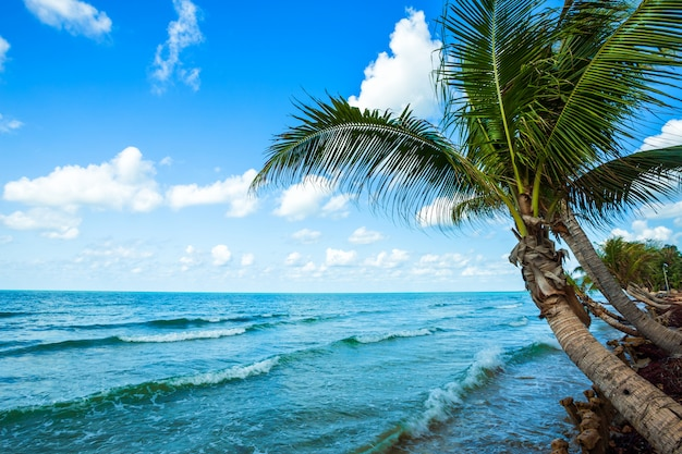 チャンタブリータイのハットチャオラオビーチで水平線と海とココナッツの木の上の美しい昼間。