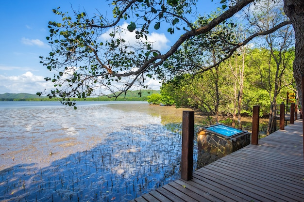 森のマングローブと海の地平線の橋木製歩道