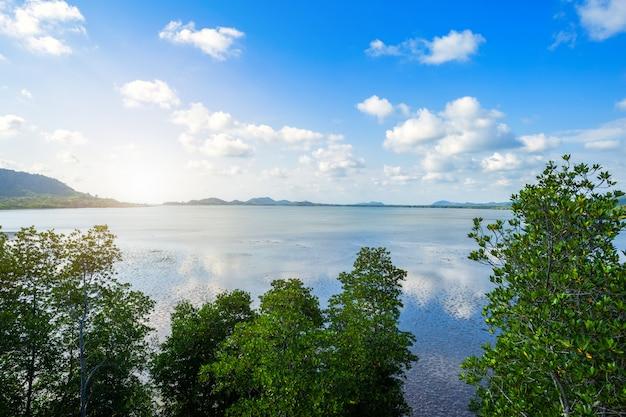 森のマングローブと海の地平線