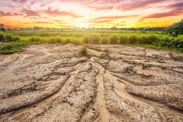 乾燥した土壌またはひびの入った地面のテクスチャとオレンジ色の空の背景に草のある土地
