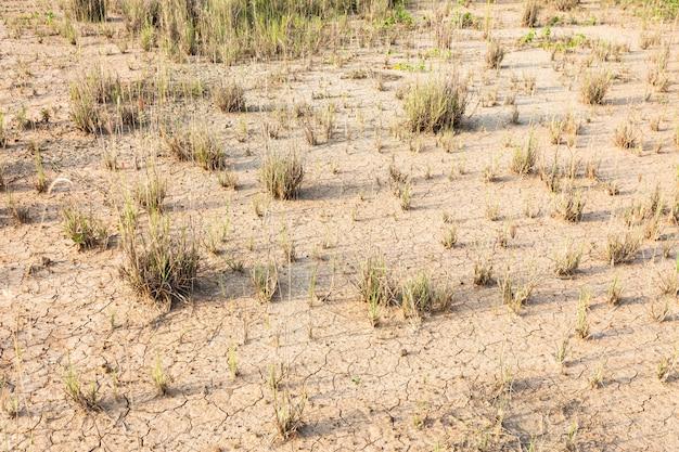 茶色の土やひびの入った地面テクスチャ背景に乾いた草背景パターン。