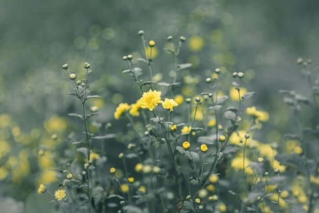 ぼんやりとした柔らかい黄色い花と緑色の背景色