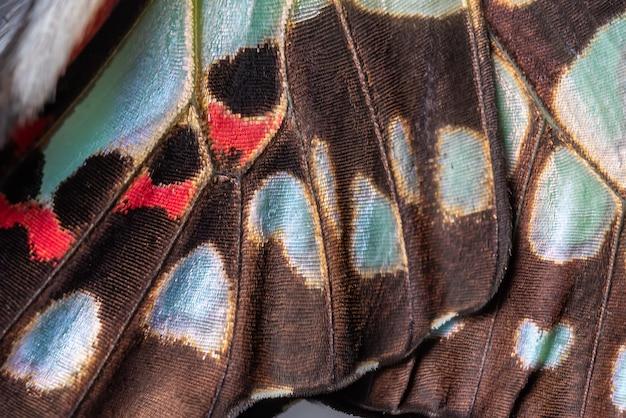 一般的なジェイバタフライの翼の詳細とテクスチャのクローズアップ