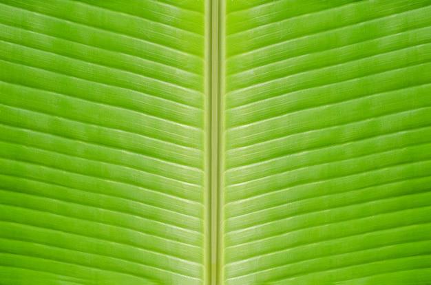 Зеленый банановый лист текстурированный фон