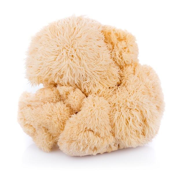 Лев гриб гриб, изолированных на белом фоне