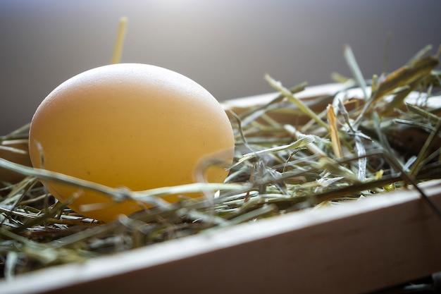 草の上の卵イースター