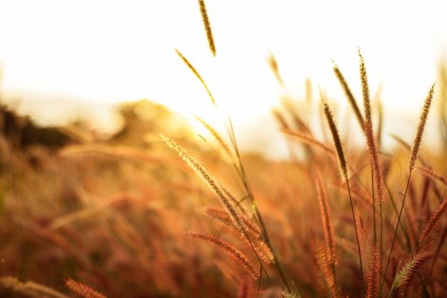 背景のグラデーションで作られた色とりどりの花草