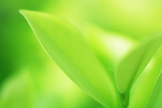 自然の背景の木の葉のボケ味