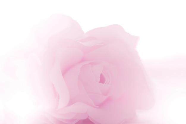 背景にカラフルなバラの花生地