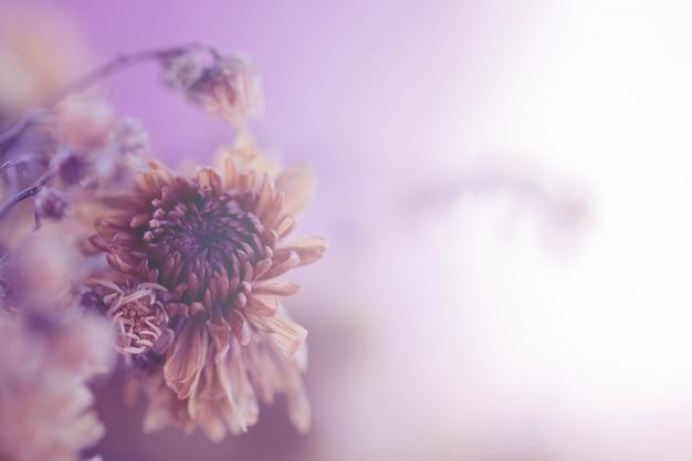 背景のビンテージ花