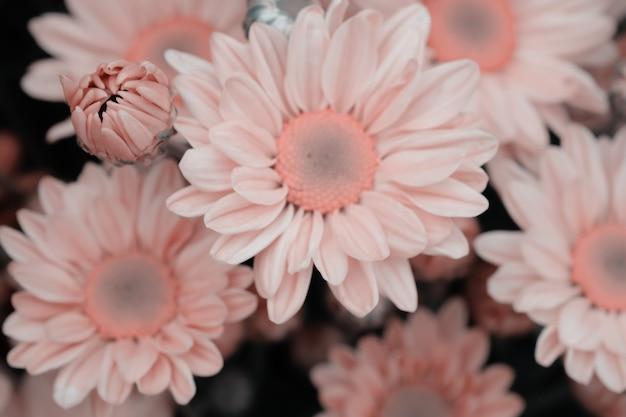 背景のグラデーションで作られた色とりどりの花の菊