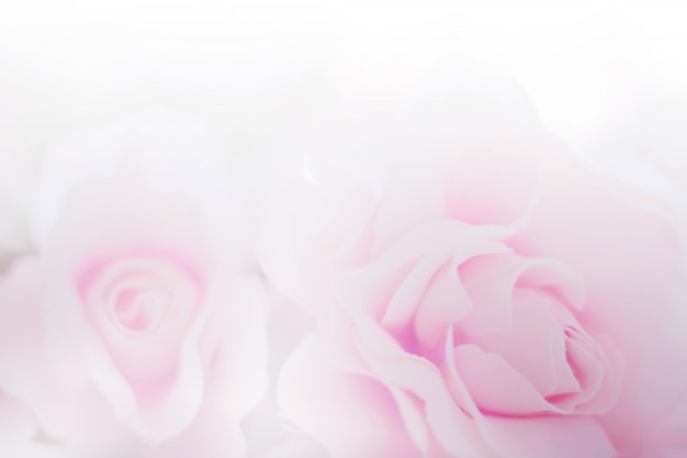 背景の紙のテクスチャのバラの花生地