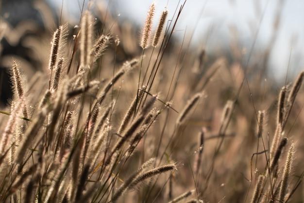 Красочные цветы трава для фона