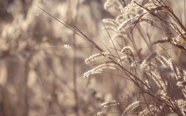 Красочная трава цветков сделанная с градиентом для предпосылки.