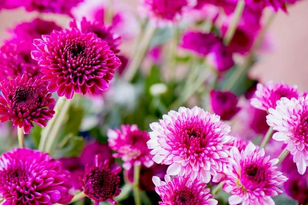 色とりどりの花の背景に菊