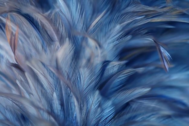 ぼやけた鳥と鶏の羽の質感の背景