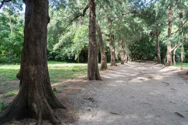 晴れた日の森と砂浜の散歩道