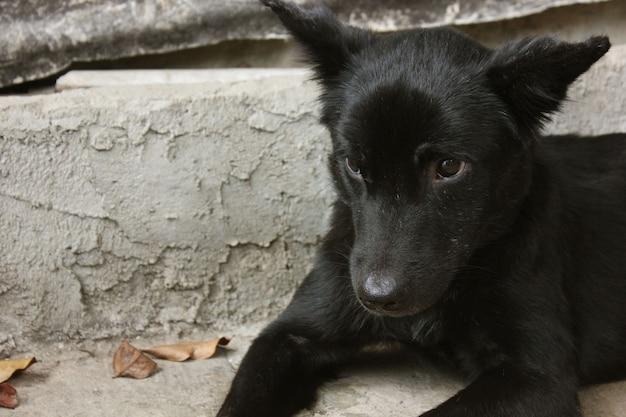 悲しい迷い犬