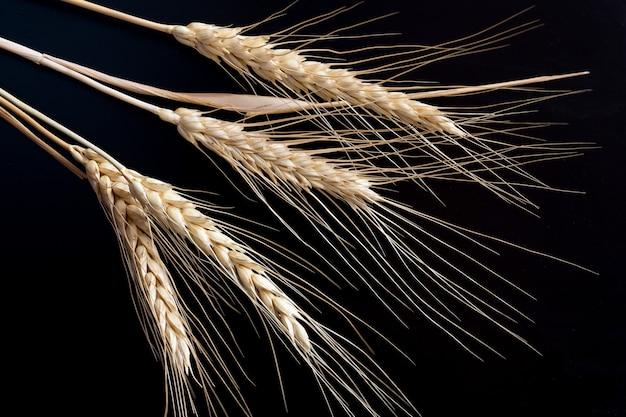 Колосья пшеницы на черном