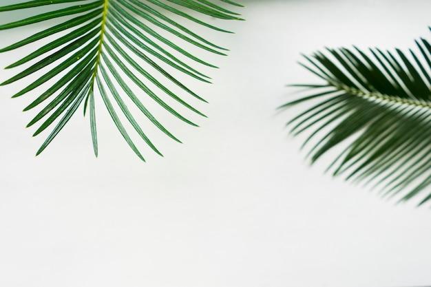 白い背景の上の葉。夏のバナー