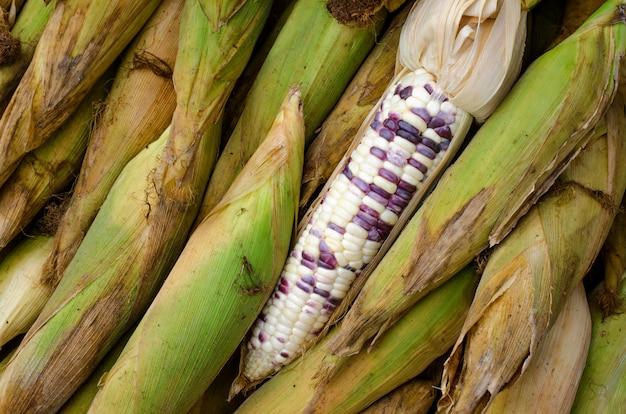 Свежий белый кукуруза