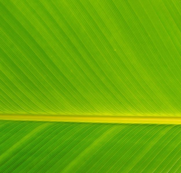 バナナのパターンはテクスチャを残す