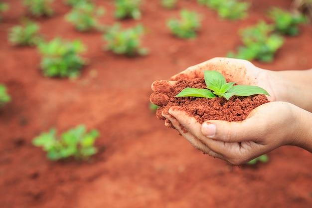 土や若い植物を持っている人々の手を閉じます。エコロジーと成長プラントのコンセプト