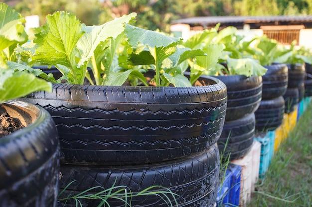 Закройте переработку шины, используемой в органической овощной ферме
