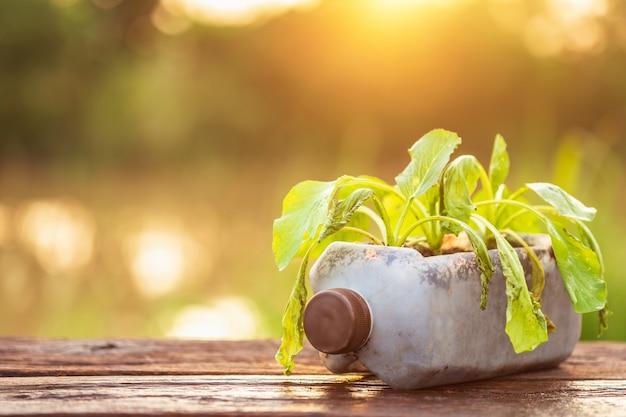 Мертвое растение или овощ в пластиковой бутылке на деревянном столе с солнечным светом в утреннее время