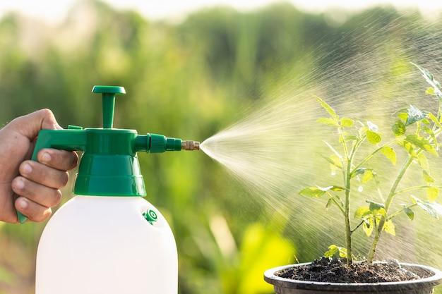 水を掛けて庭の若い植物にスプレーする手