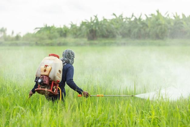 若い緑の田んぼに化学薬品を吹き付けて農業をする農業従事者