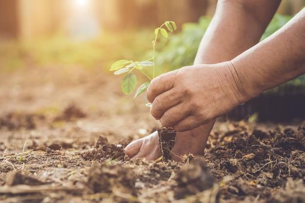 若い蝶のエンドウ豆の木を土に保持して植える手。世界とエコロジーのコンセプトを保存する