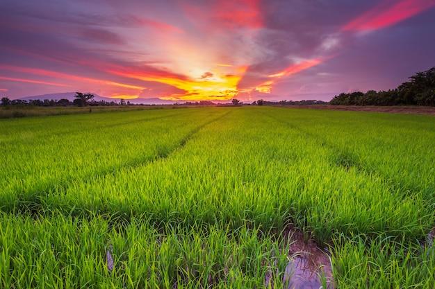 田んぼのパノラマ風景と美しい空の日没