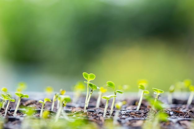 土壌で成長する若い野菜植物