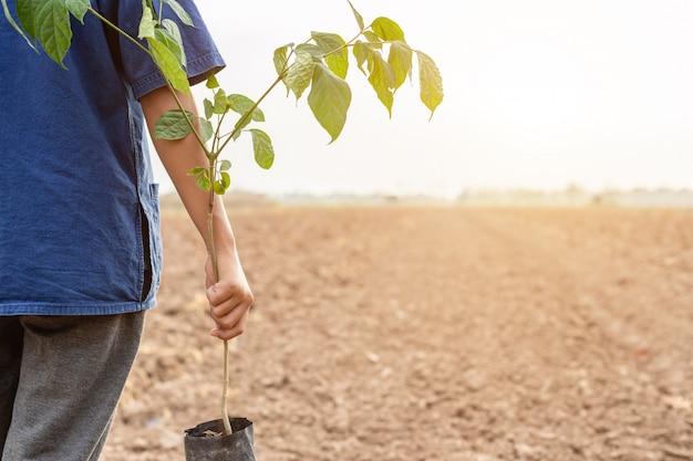 農家の植栽のための空の土地で小さな木を保持