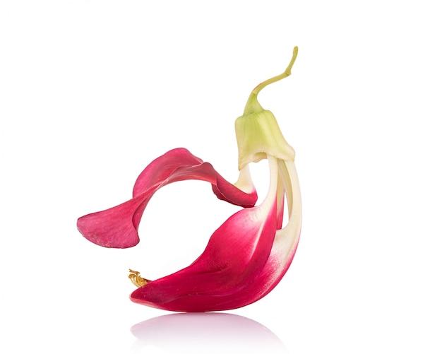 赤いアガスタの花、セスバンまたは野菜ハミングバード白で分離