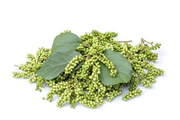 タイのブルーベリーの若い緑