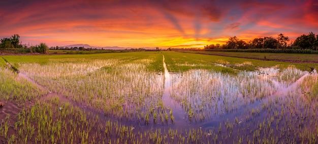田んぼと美しい空の夕焼けのパノラマ風景