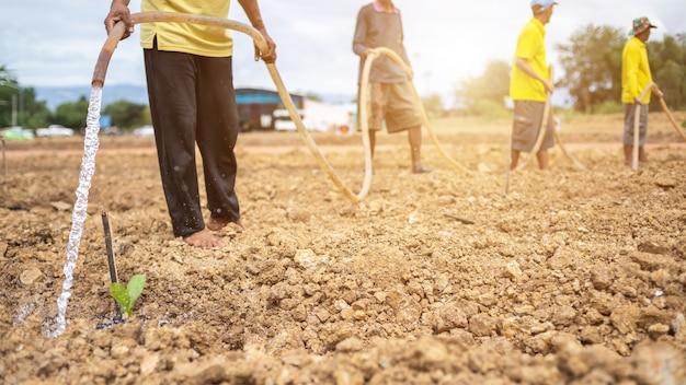 タイの王の誕生日を祝うために木を植える人々