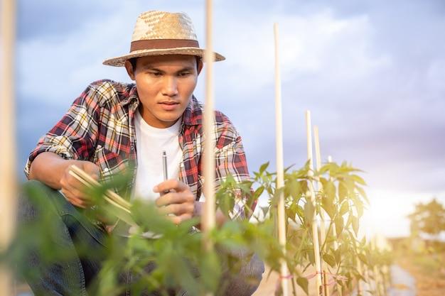 アジア農家のノートを保持し、彼の植物や野菜(チリの木)をチェック