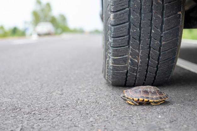 道路上のカメをほとんど踏む車のホイール