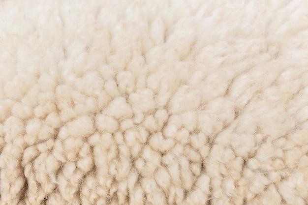 背景のウール羊のクローズアップ