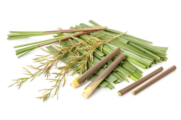 Цветок и лист красной травы лемонграсса или цитронеллы